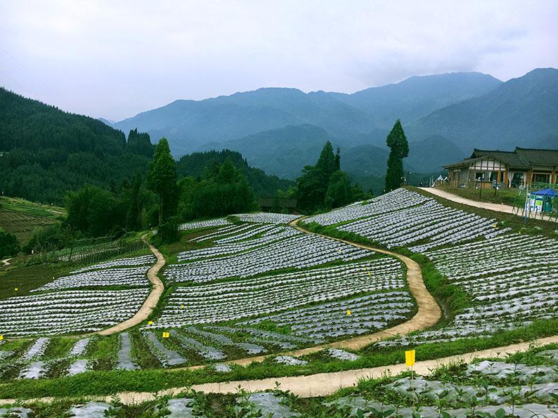 28-千亩蔬菜基地