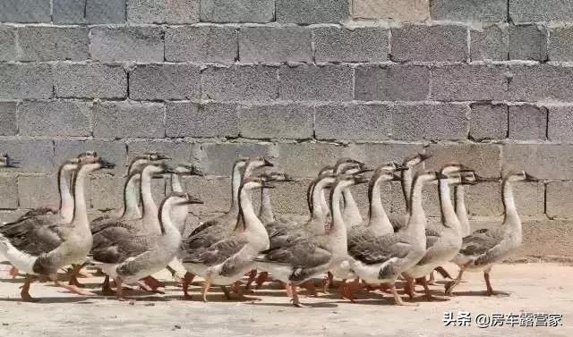 云南安宁潘茂野趣庄园19