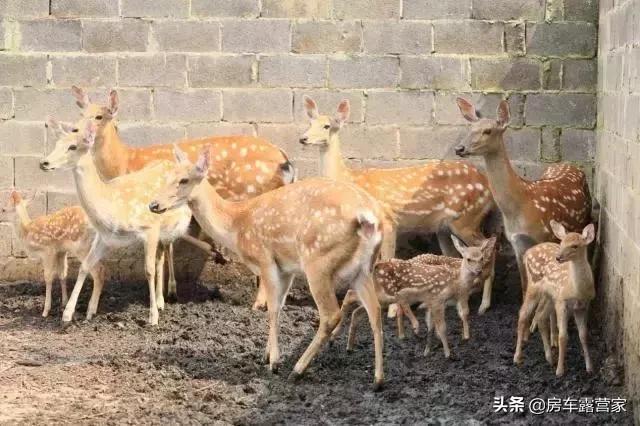 云南安宁潘茂野趣庄园21