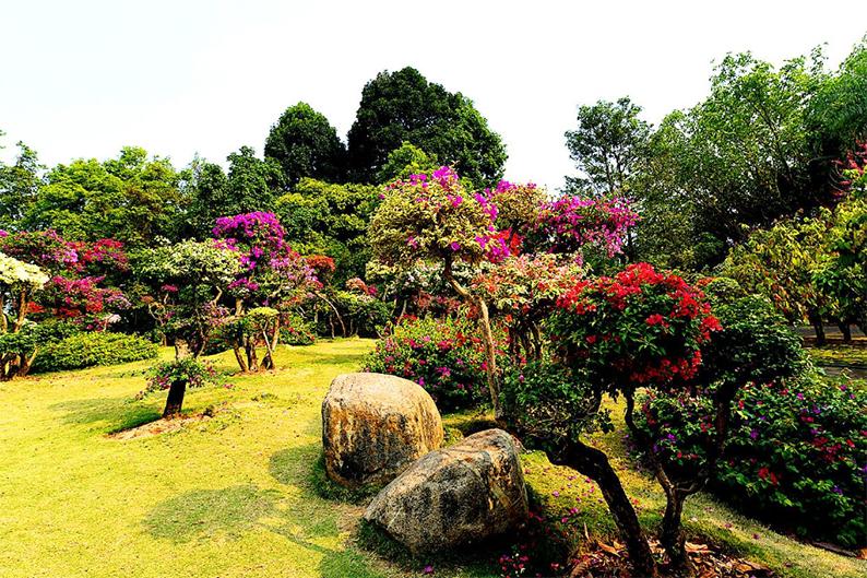 西双版纳热带花卉园2