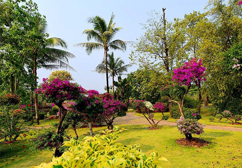 西双版纳热带花卉园6