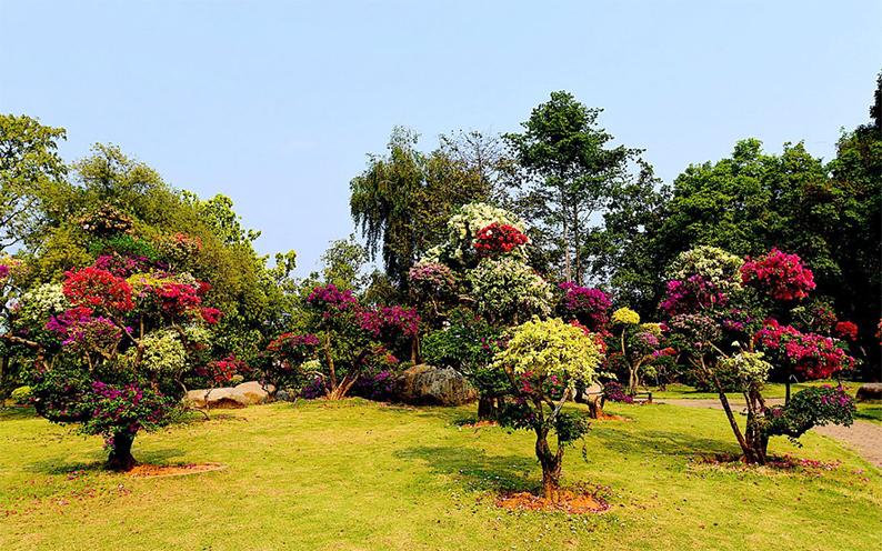 西双版纳热带花卉园4