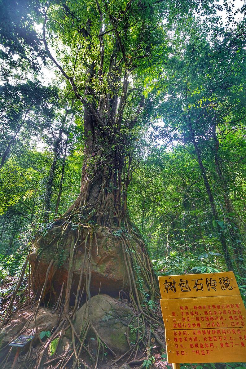 莫里热带雨林4