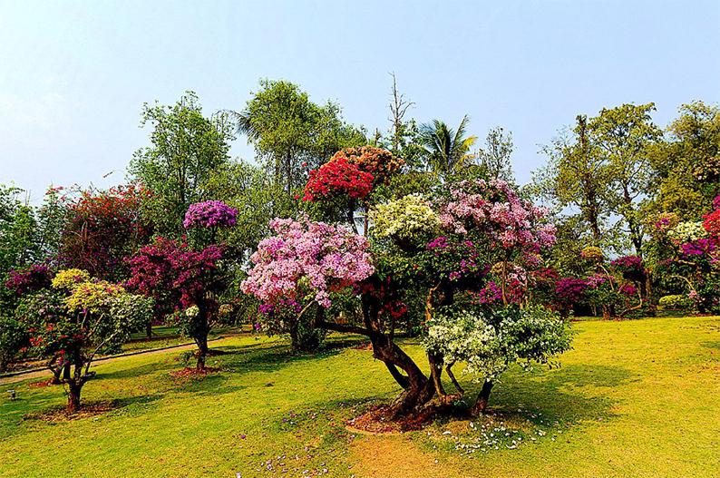 西双版纳热带花卉园3