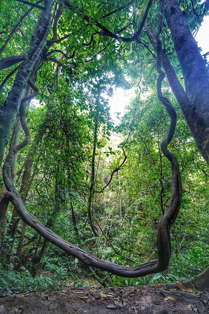 莫里热带雨林3