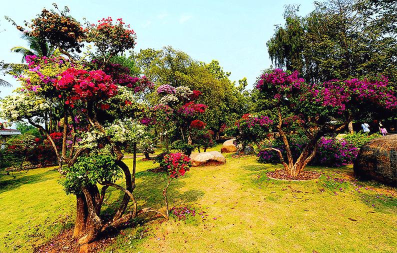 西双版纳热带花卉园5