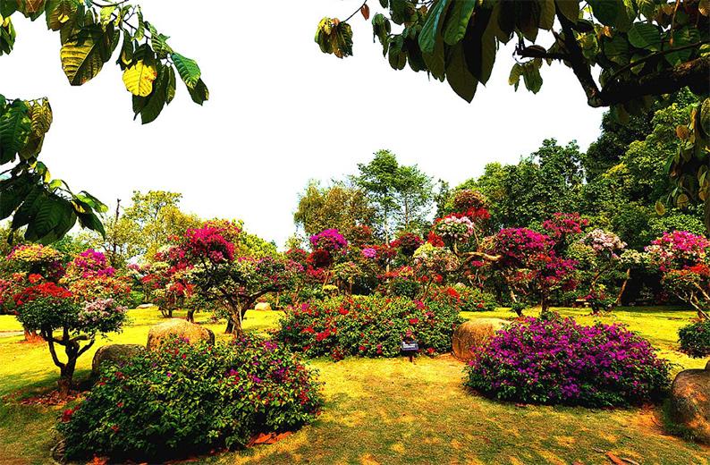 西双版纳热带花卉园1