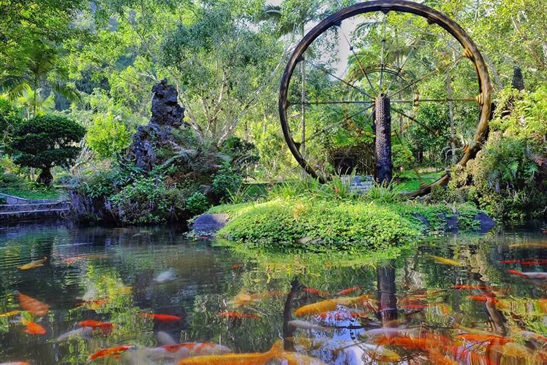 莫里热带雨林1