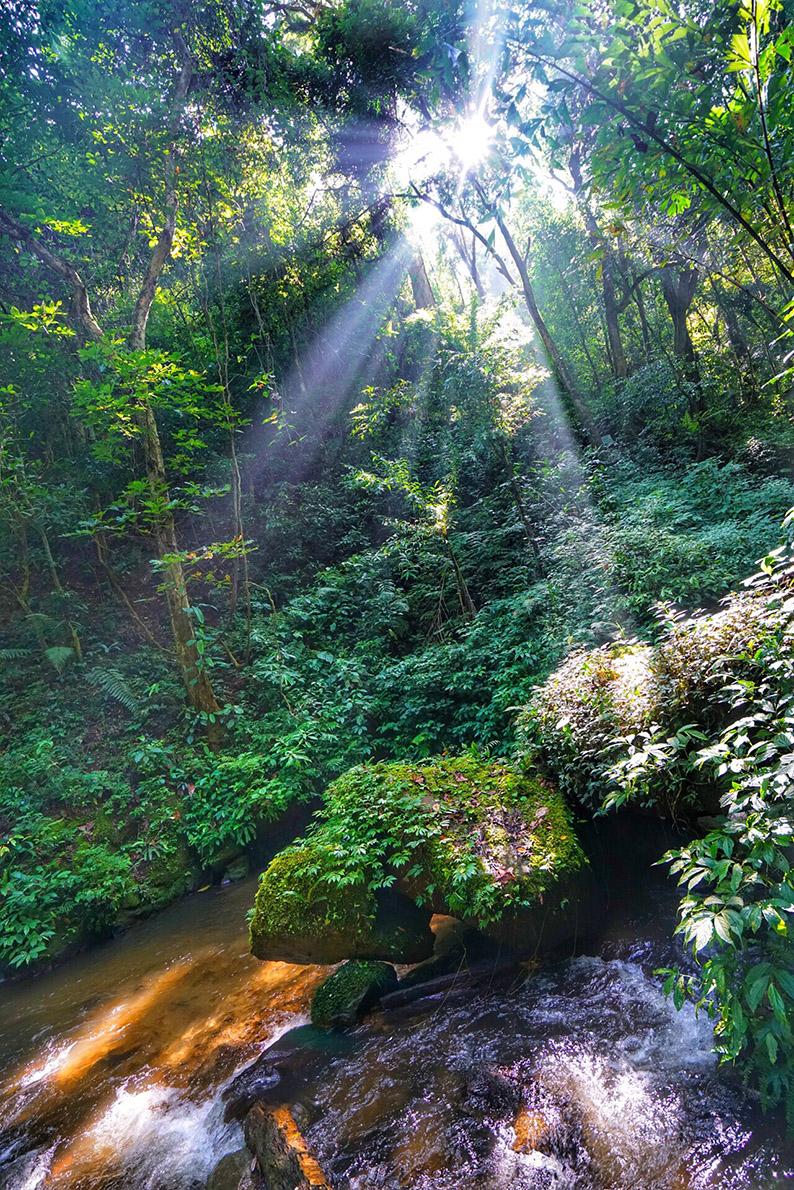 莫里热带雨林2