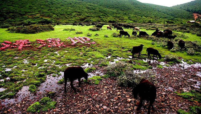 格萨拉生态旅游区9