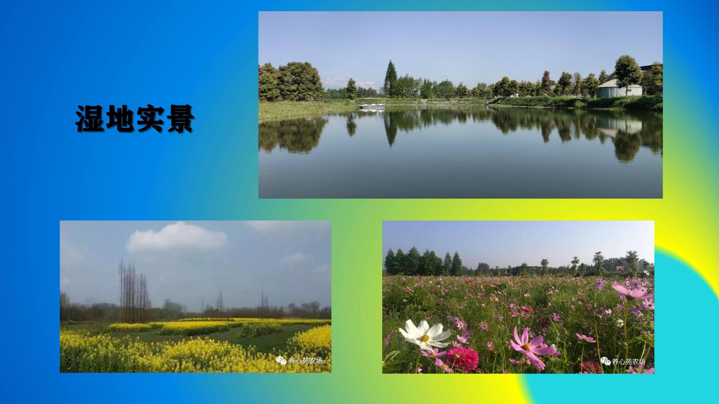 沈家船田园水乡智慧生态园 (30)